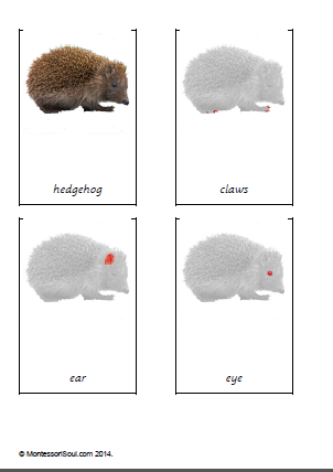 Terminology cards Parts of a hedgehog