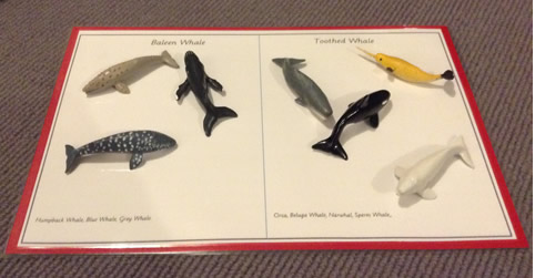 Smallest Whale story box
