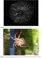 Spider photo facts
