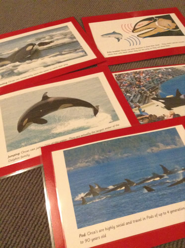 Orca photo facts