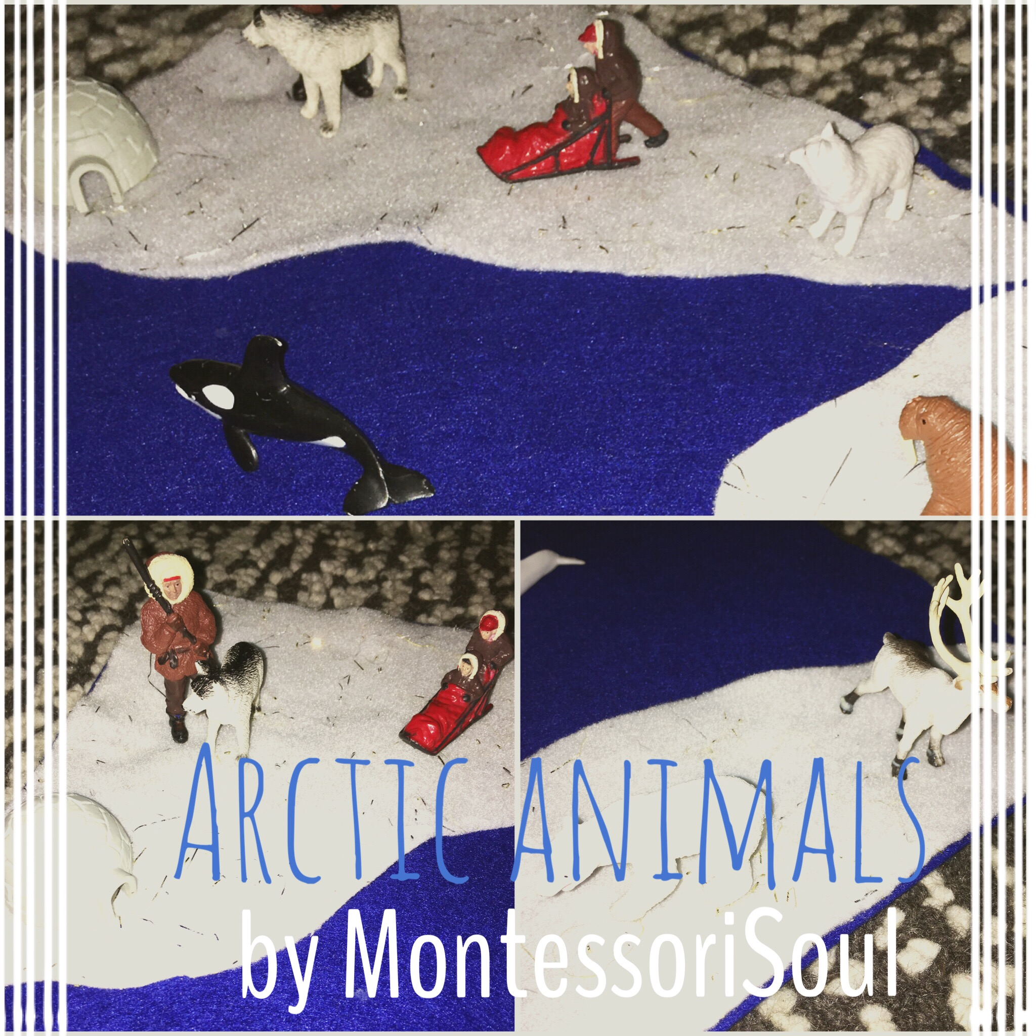 Arctic animals lesson plan
